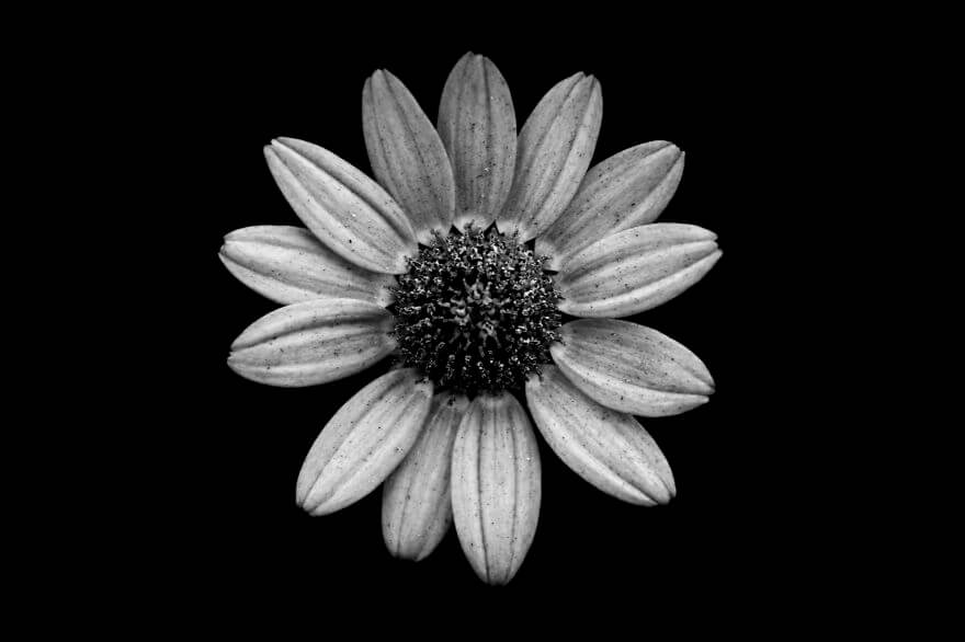 Jason mcgroarty takes black and white flowers photos to show the beautiful symmetry of nature