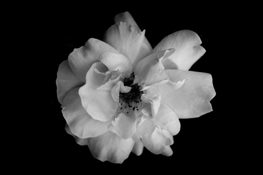 black and white flowers 4 (1)