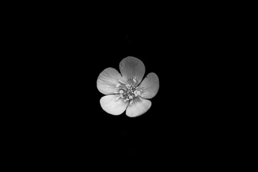 black and white flowers 5 (1)