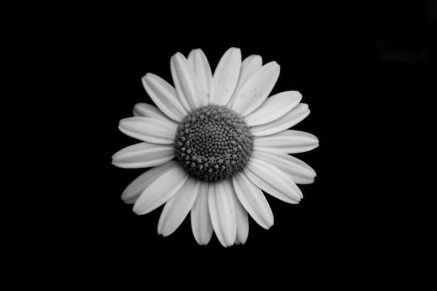 Black And White Photo Flowers