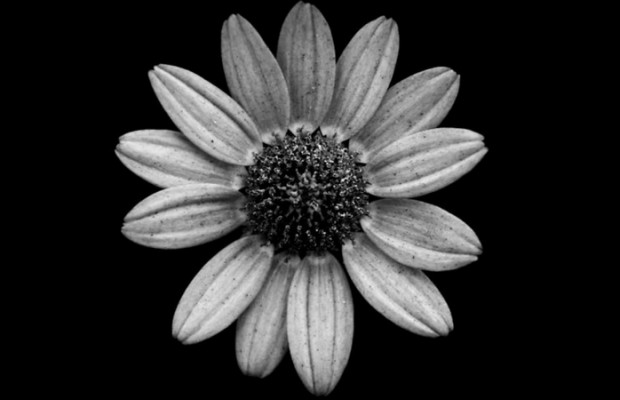 black and white flowers feat