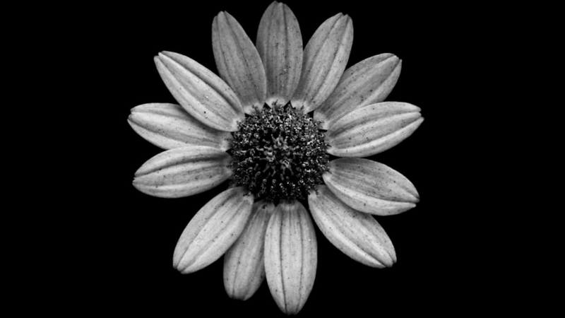 [50+] Black and White Flowers Wallpaper on WallpaperSafari |Flower Pictures Black And White
