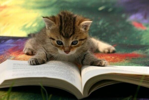 cat puns 11 (1)