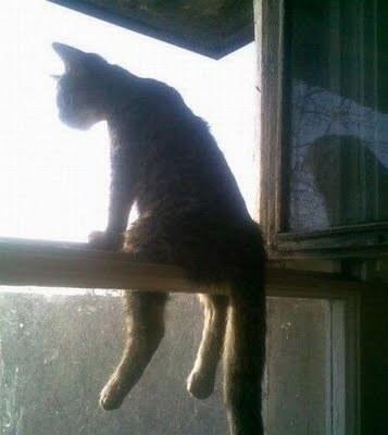 cat puns 13 (1)