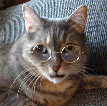 cats in glasses (1)