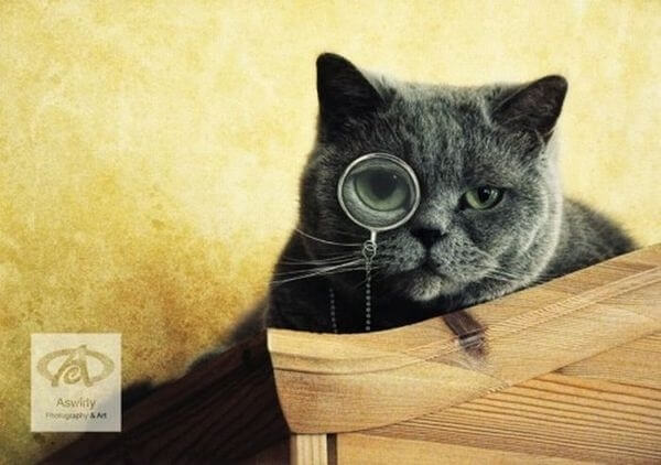 cats wearing glasses 10 (1)
