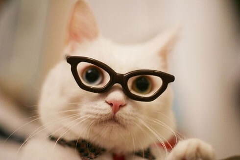 cats wearing glasses 11 (1)