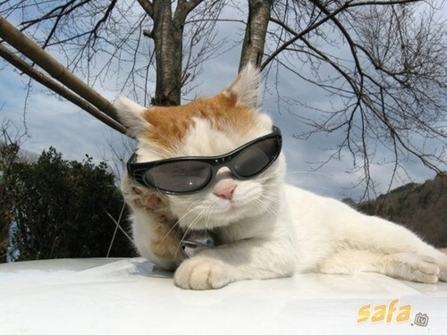 cats wearing glasses 12 (1)