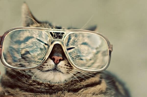 cats wearing glasses 13 (1)