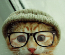 cats wearing glasses 14 (1)