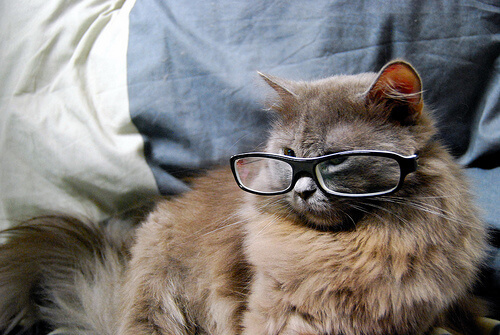 cats wearing glasses 15 (1)