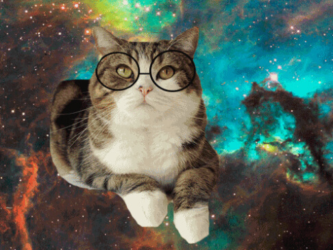 cats looking cool in glasses 16 (1)