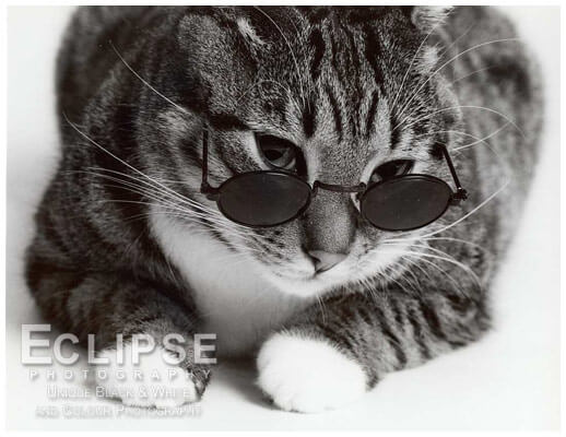cats looking cool in glasses 17 (1)