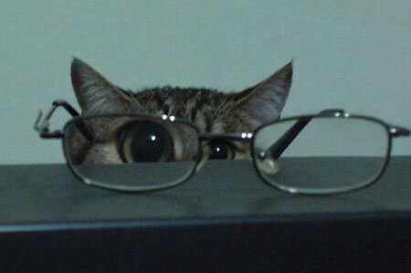 cats looking cool in glasses 18 (1)