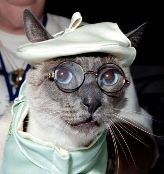 cats looking cool in glasses 19 (1)