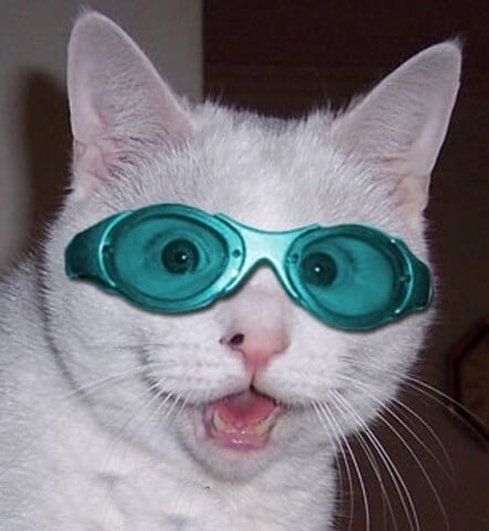 cats looking cool in glasses 2 (1)