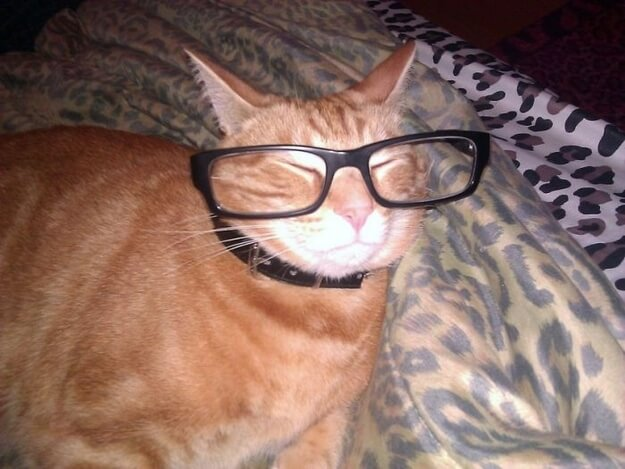 cats looking cool in glasses 21 (1)
