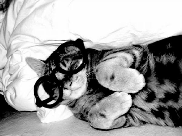 cats looking cool in glasses 22 (1)