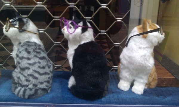 cats looking cool in glasses 24 (1)