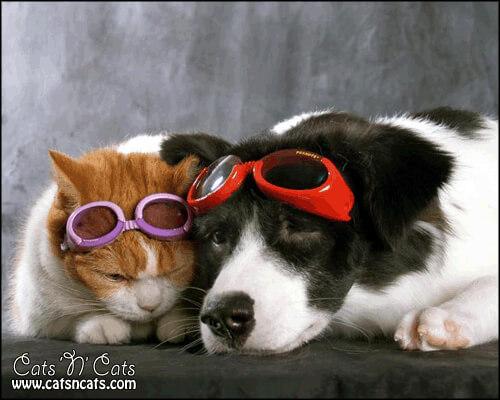 cats cool glasses 28 (1)