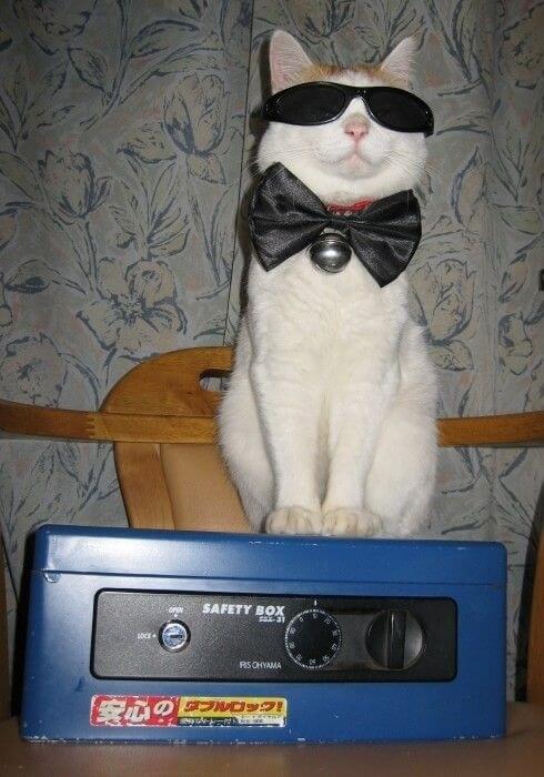 cats cool glasses 29 (1)