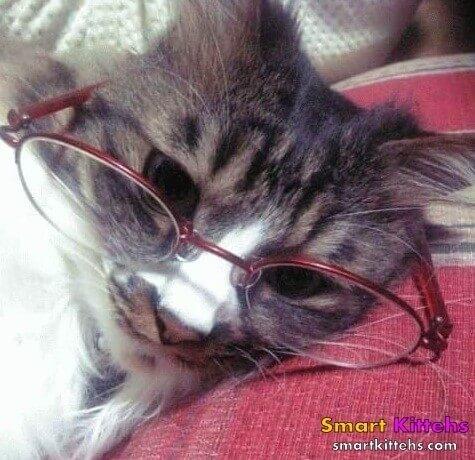 cats cool glasses 30 (1)
