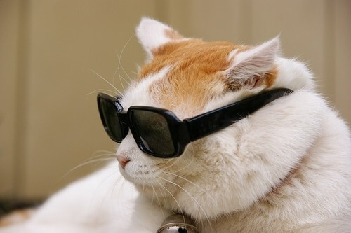 cats in shades 31 (1)