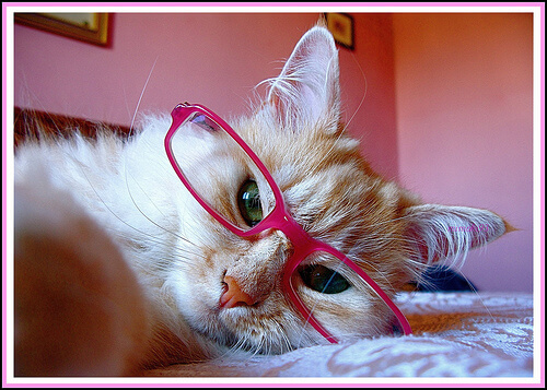cats in shades 34 (1)