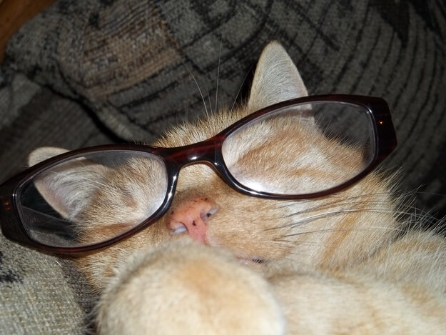 cats in shades 35 (1)