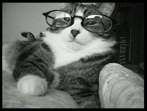 cats in shades 40 (1)