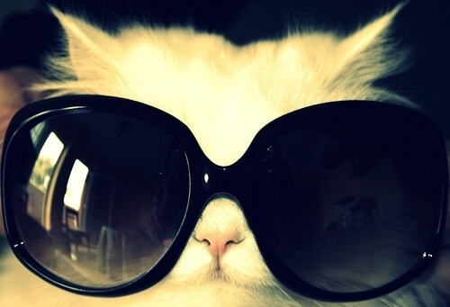 cats looking cool in shades 41 (1)