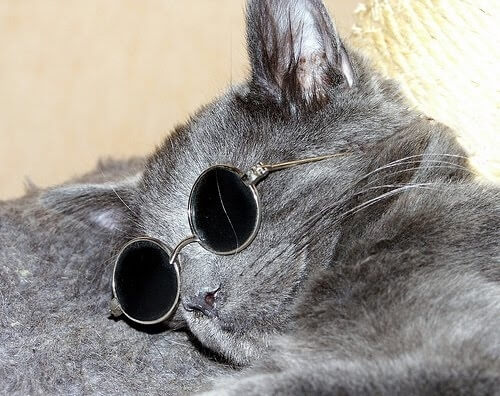 cats looking cool in glasses 42 (1)