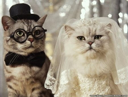 cats in glasses 43 (1)