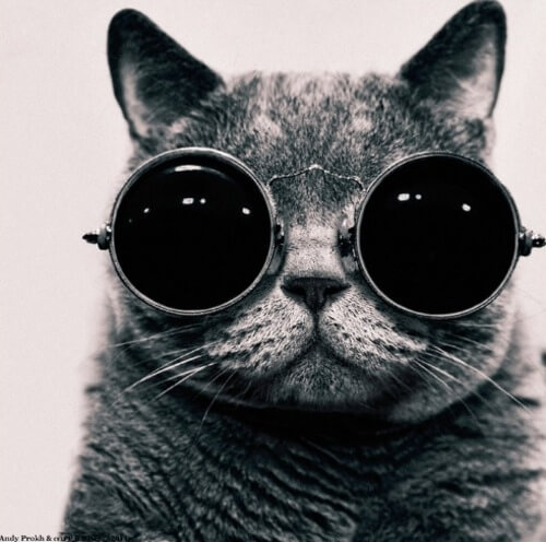 cats wearing glasses 5 (1)