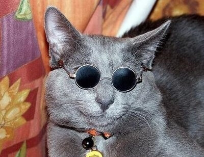 cats wearing glasses 6 (1)
