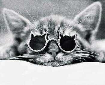 cats wearing glasses 7 (1)