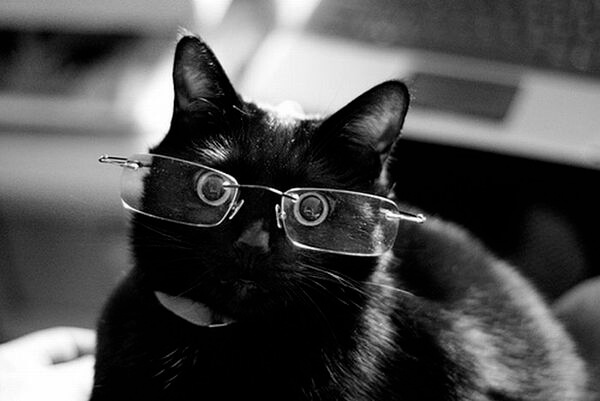 cats wearing glasses 8 (1)