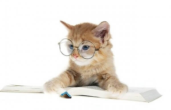 cats wearing glasses 9 (1)