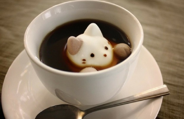 marshmallows cats feat