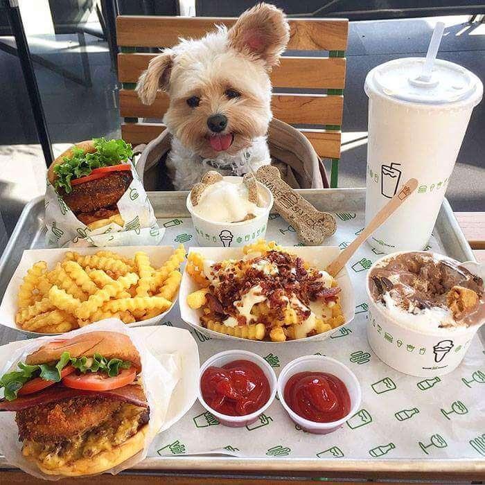 popeye the food dog 11 (1)
