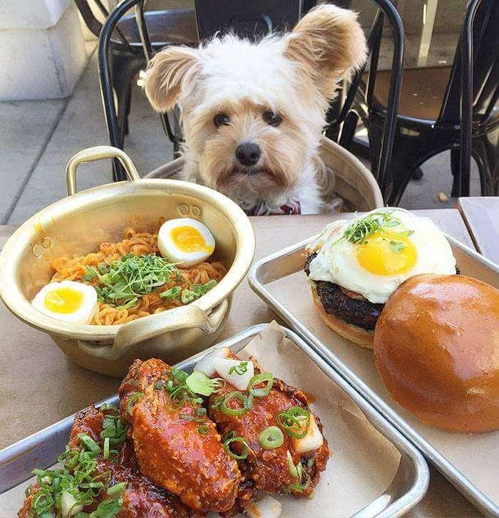 popeye the food dog 3 (1)