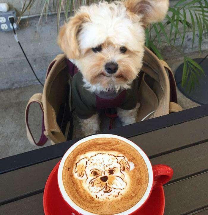 popeye the food dog 5 (1)
