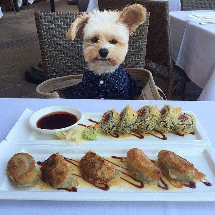 popeye the food dog 6 (1)