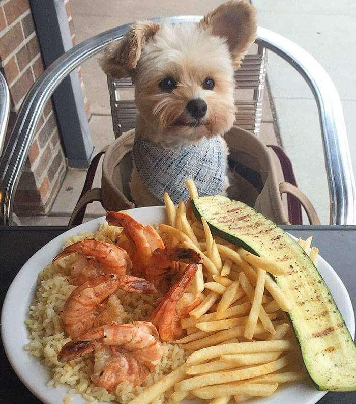 popeye the food dog 7 (1)