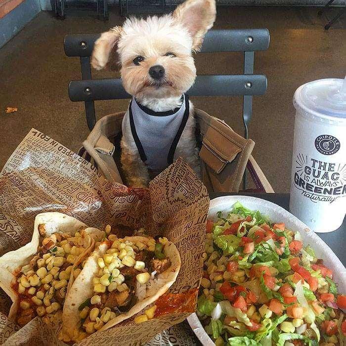 popeye the food dog 8 (1)