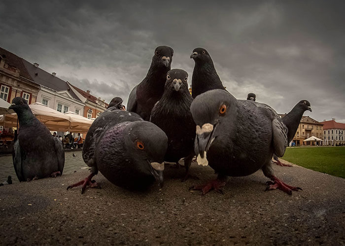 Animals That Look Like They're About To Drop The Hottest Albums Of The Year (1)
