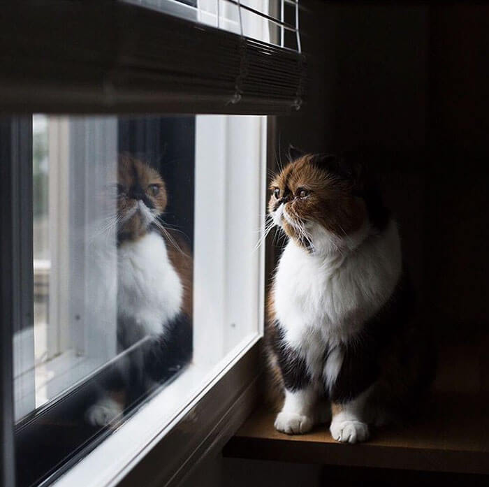 pets That Look Like They're About To Drop The Hottest Albums Of The Year 15 (1)