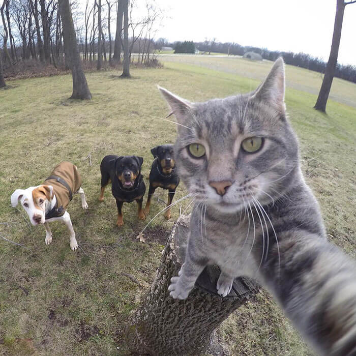 pets That Look Like They're About To Drop The Hottest Albums Of The Year 19 (1)