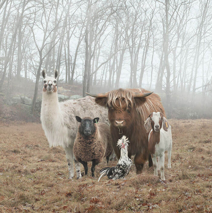 Animals That Look Like They're About To Drop The Hottest Albums Of The Year 2 (1)