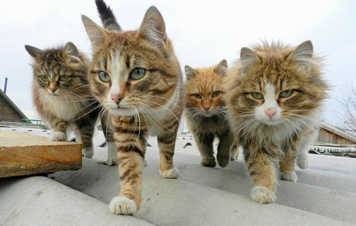 Animals That Look Like They're About To Drop The Hottest Albums Of The Year 3 (1)